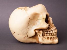 Сувенирен пепелник с формата на череп